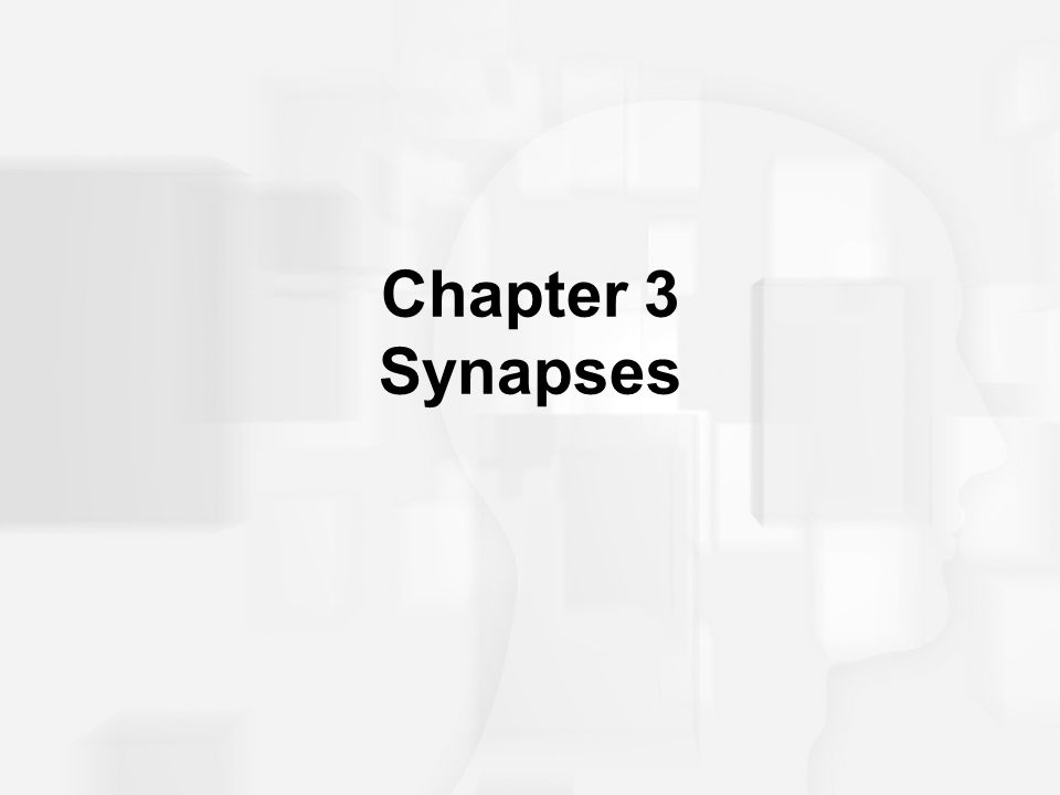 Chapter 3 Synapses