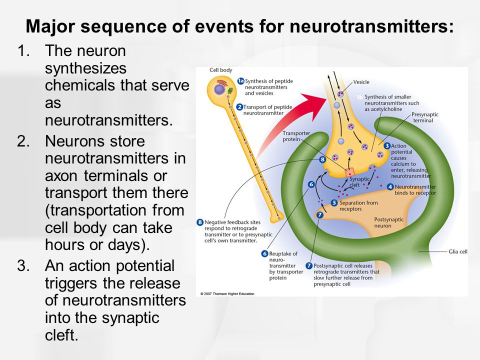Major sequence of events for neurotransmitters:
