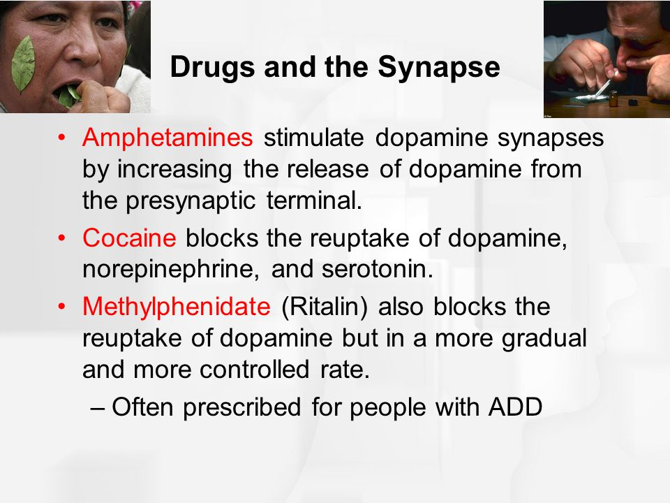 Drugs and the Synapse Amphetamines stimulate dopamine synapses by increasing the release of dopamine from the presynaptic terminal.