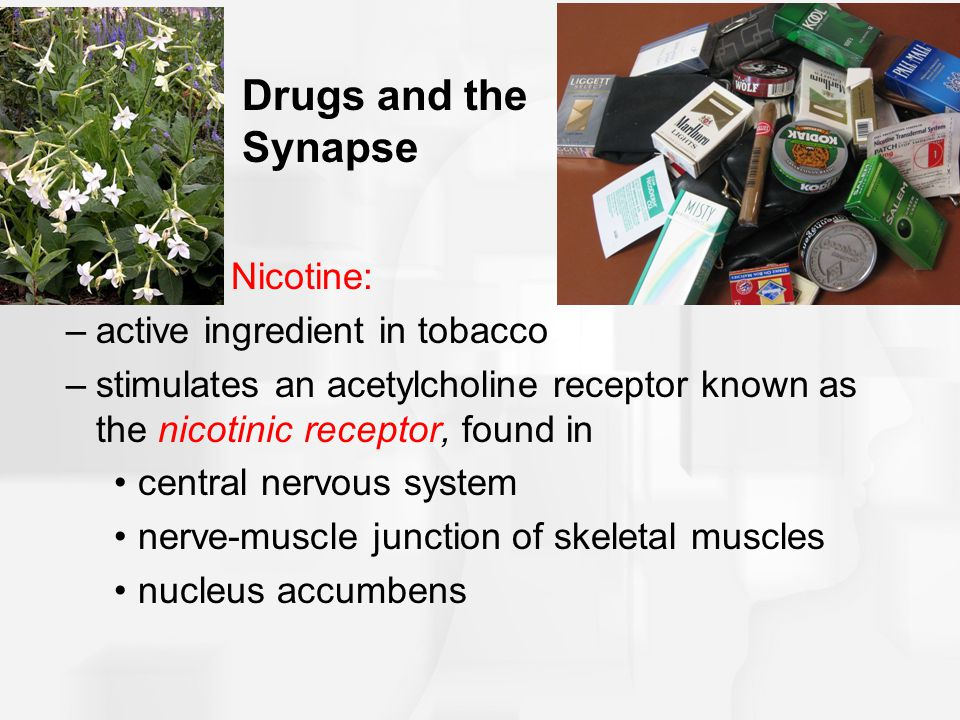 Drugs and the Synapse Nicotine: active ingredient in tobacco