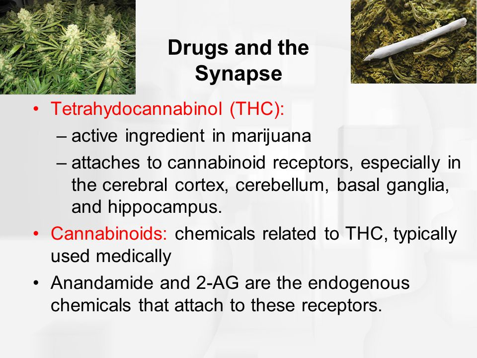 Drugs and the Synapse Tetrahydocannabinol (THC):