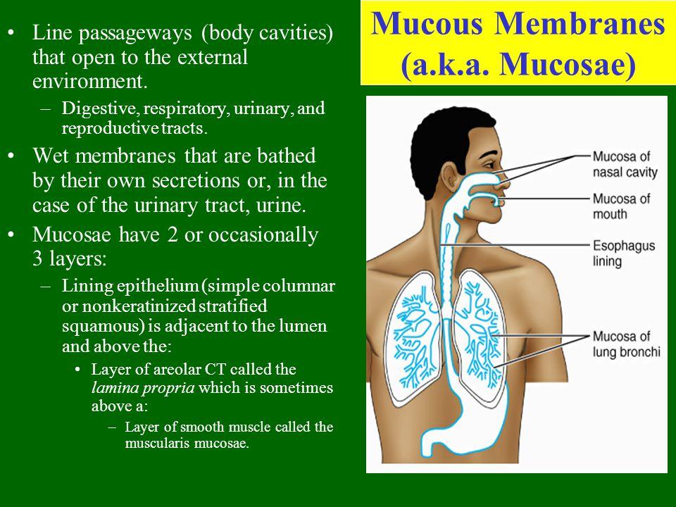 Mucous Membranes (a.k.a. Mucosae)