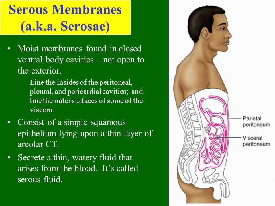 Serous Membranes (a.k.a. Serosae)