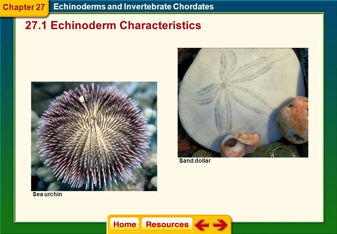 27.1 Echinoderm Characteristics