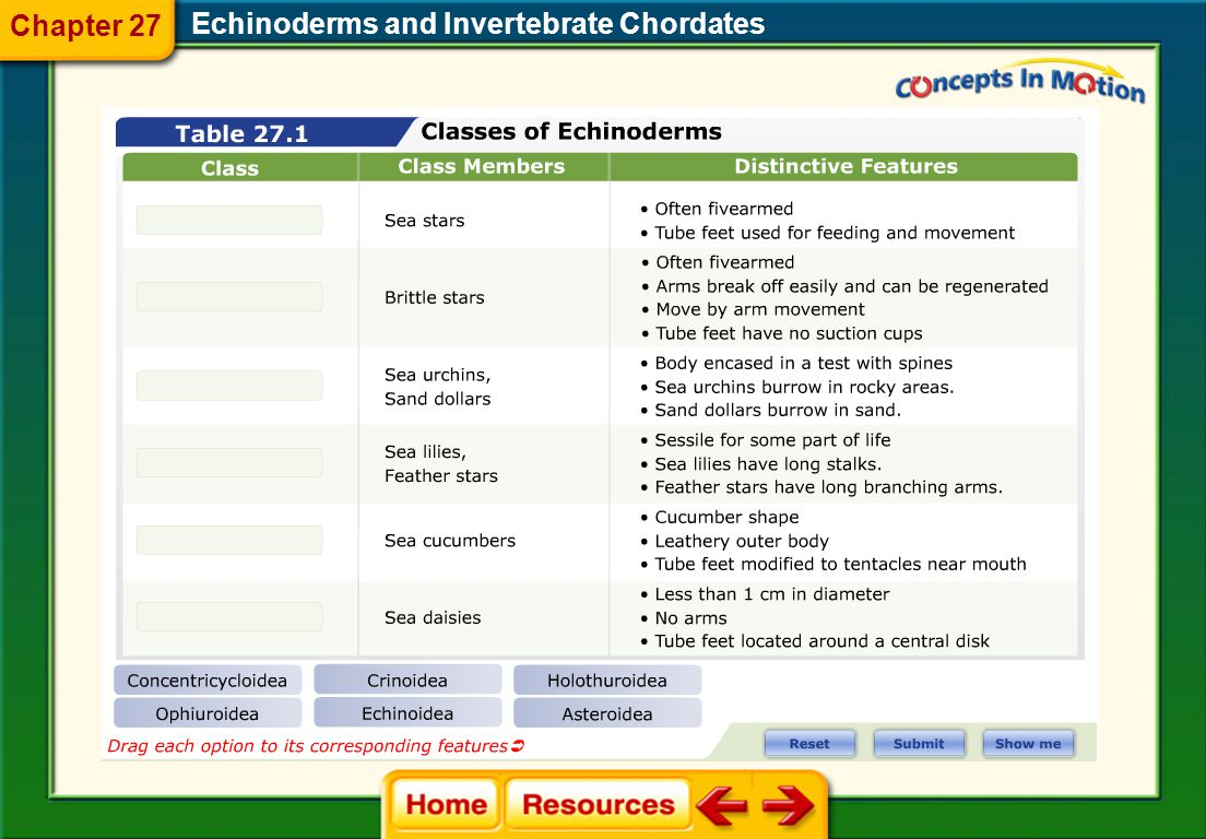 Chapter 27 Echinoderms and Invertebrate Chordates
