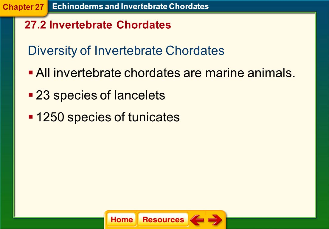 Diversity of Invertebrate Chordates