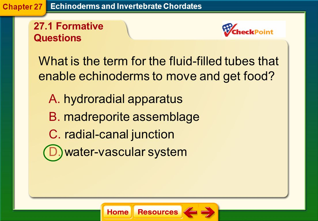 What is the term for the fluid-filled tubes that