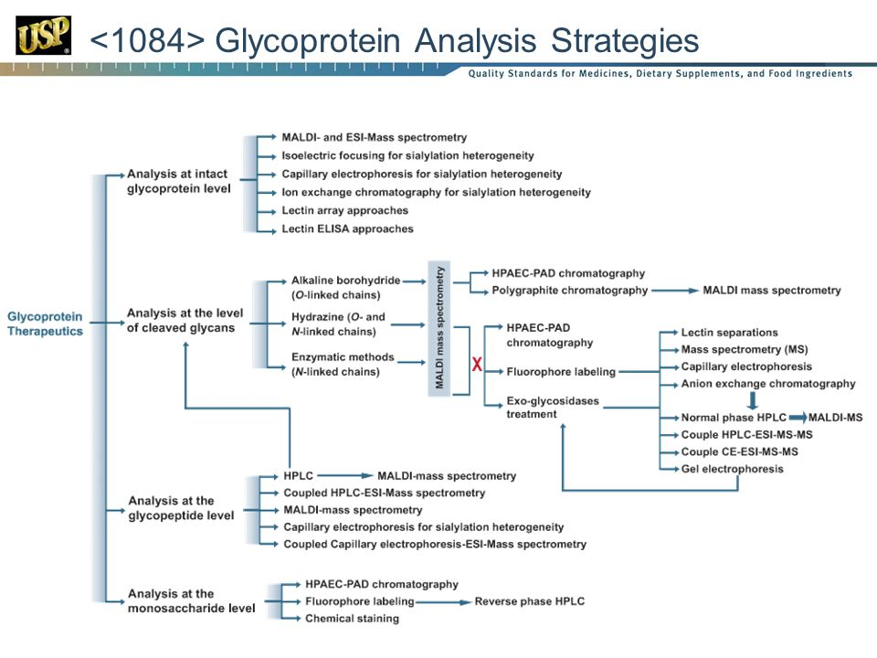<1084> Glycoprotein Analysis Strategies