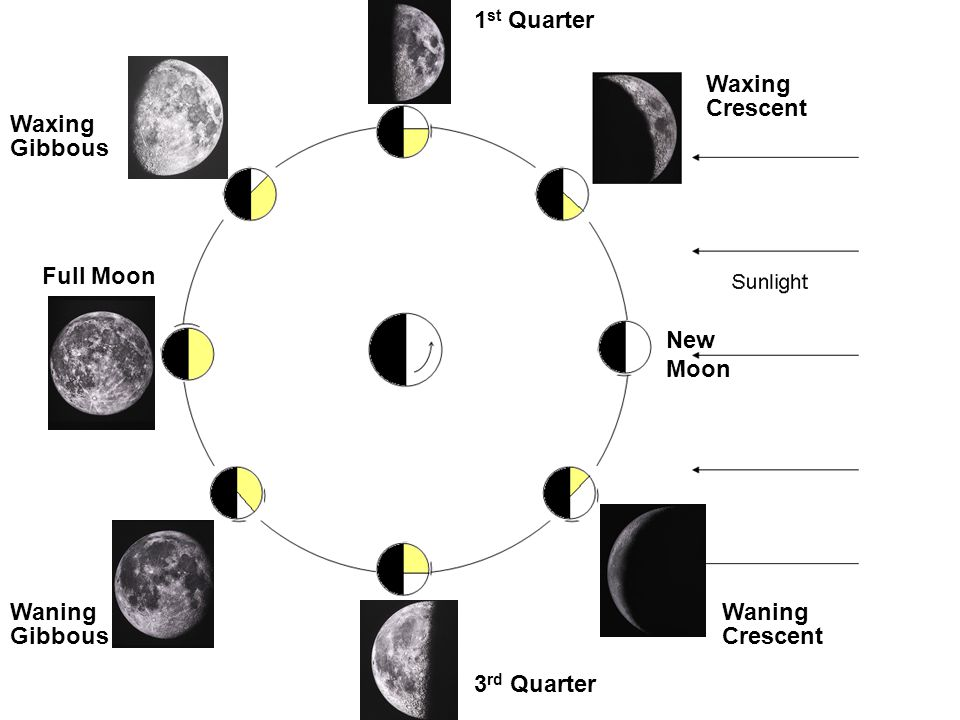 1st Quarter Waxing. Crescent. Waxing. Gibbous. Full Moon. New Moon. Waning. Waning. Gibbous.