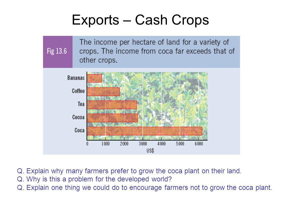 Exports – Cash Crops Q. Explain why many farmers prefer to grow the coca plant on their land. Q. Why is this a problem for the developed world