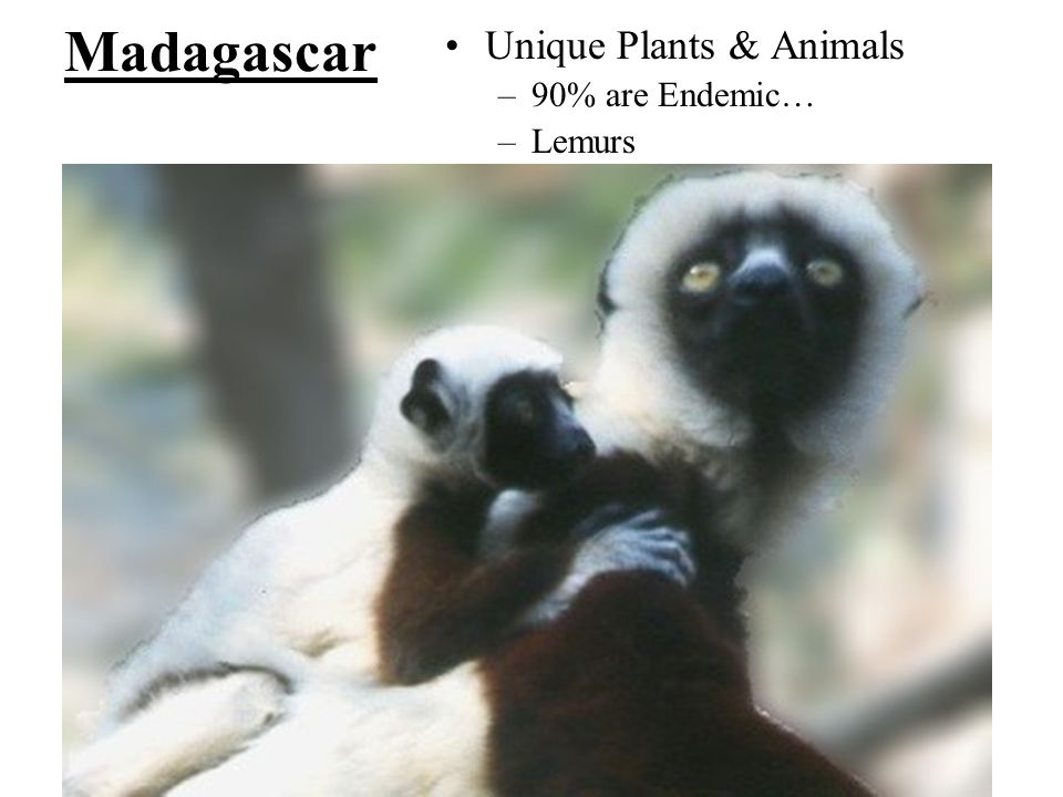 Madagascar Unique Plants & Animals 90% are Endemic… Lemurs