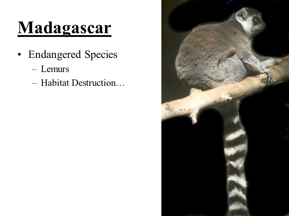 Madagascar Endangered Species Lemurs Habitat Destruction…