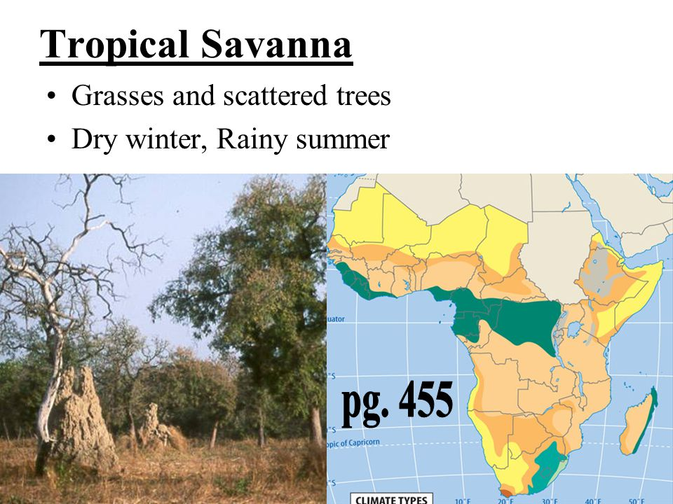 Tropical Savanna pg. 455 Grasses and scattered trees