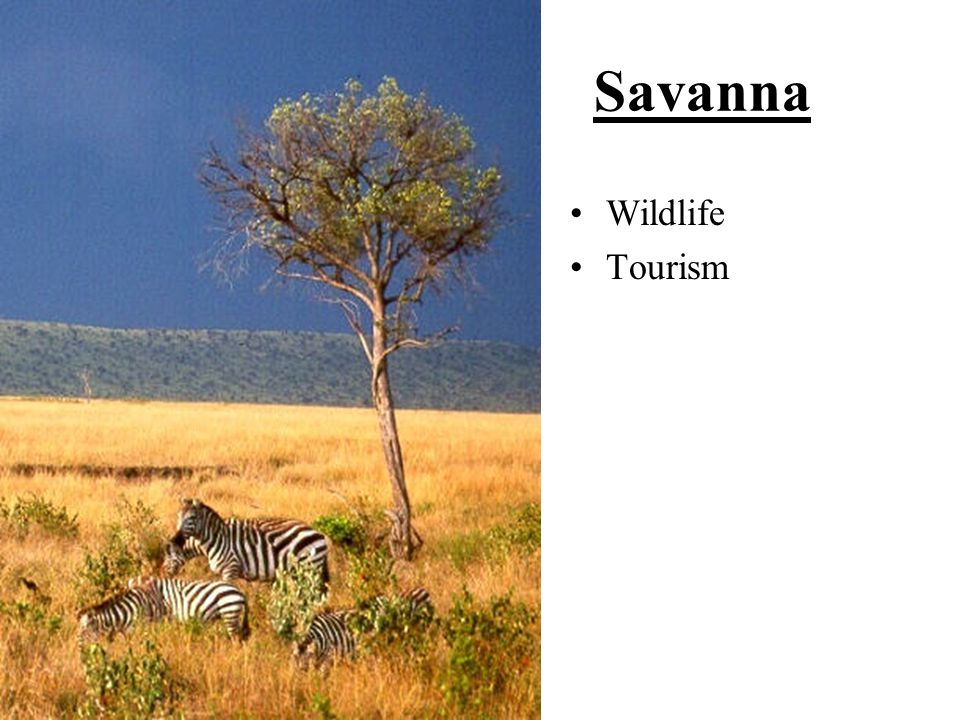 Savanna Wildlife Tourism