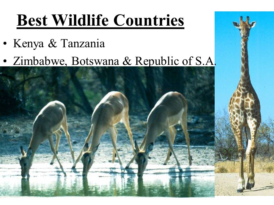 Best Wildlife Countries