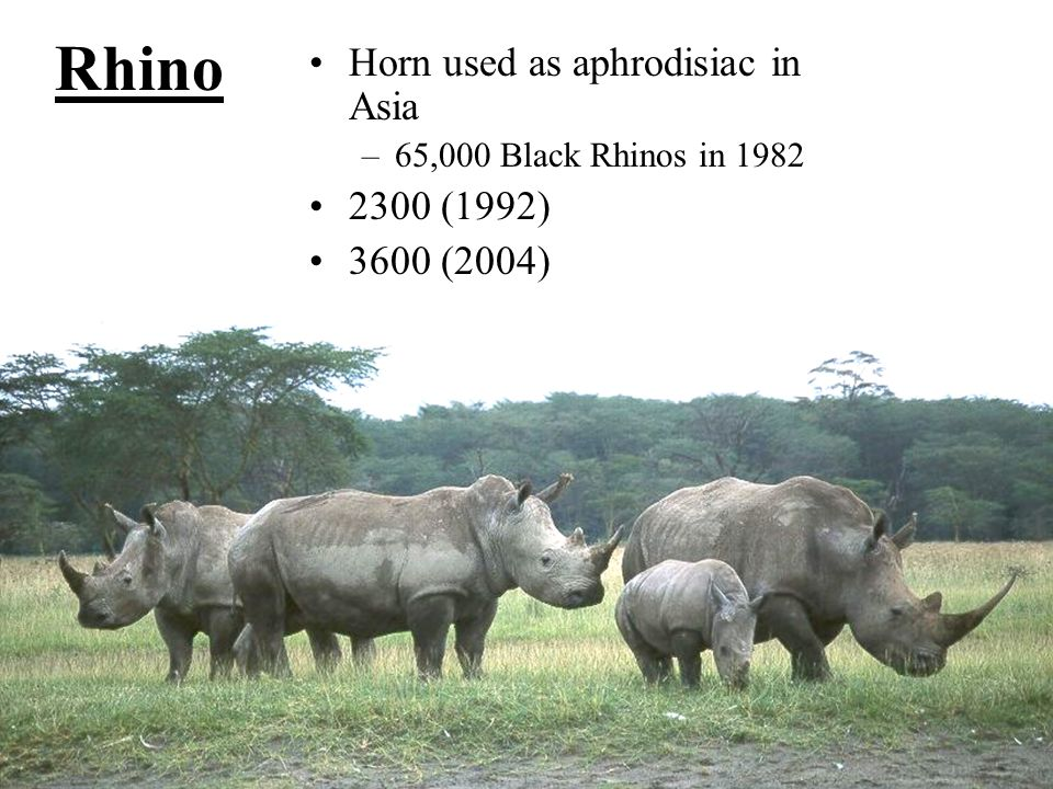 Rhino Horn used as aphrodisiac in Asia 2300 (1992) 3600 (2004)