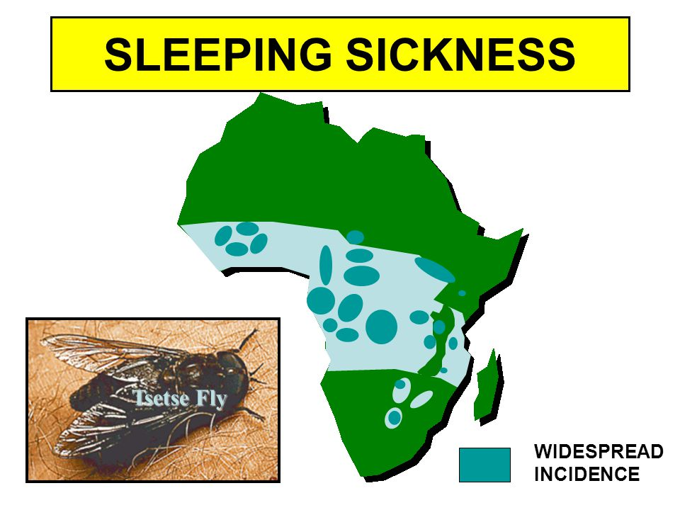 SLEEPING SICKNESS Tsetse Fly WIDESPREAD INCIDENCE