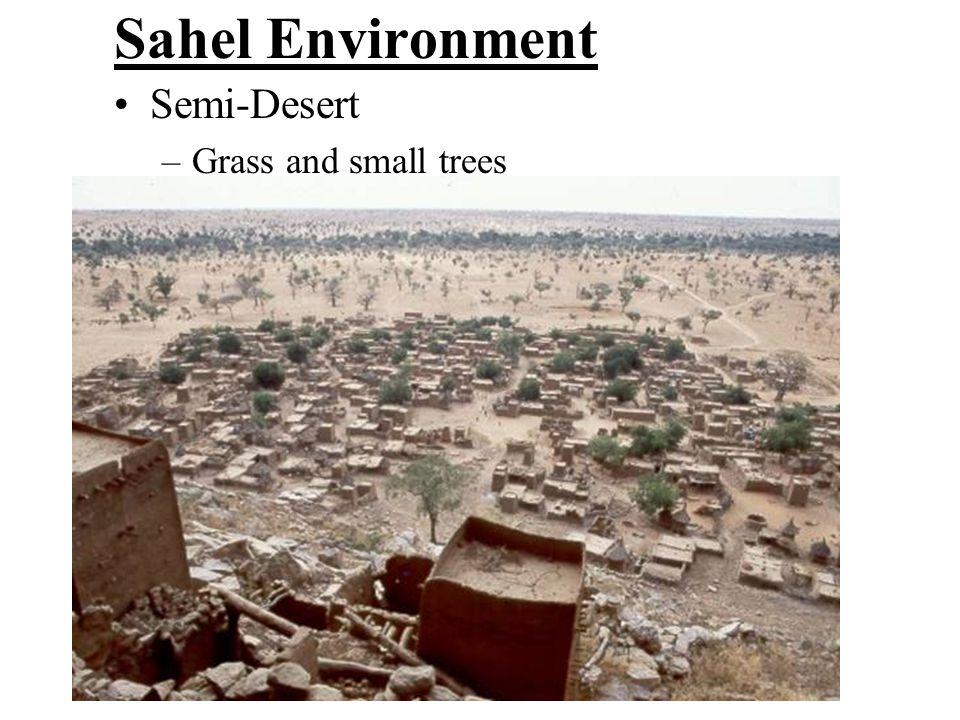 Sahel Environment Semi-Desert Grass and small trees