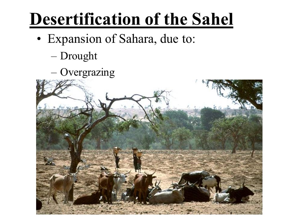 Desertification of the Sahel