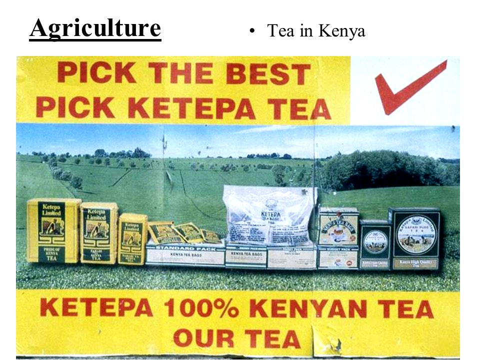 Agriculture Tea in Kenya