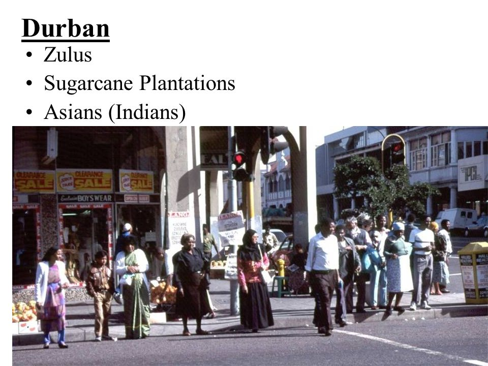 Durban Zulus Sugarcane Plantations Asians (Indians)
