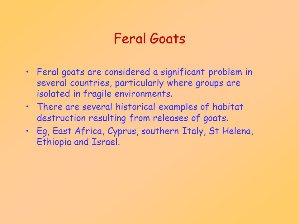 Feral Goats Feral goats are considered a significant problem in several countries, particularly where groups are isolated in fragile environments.