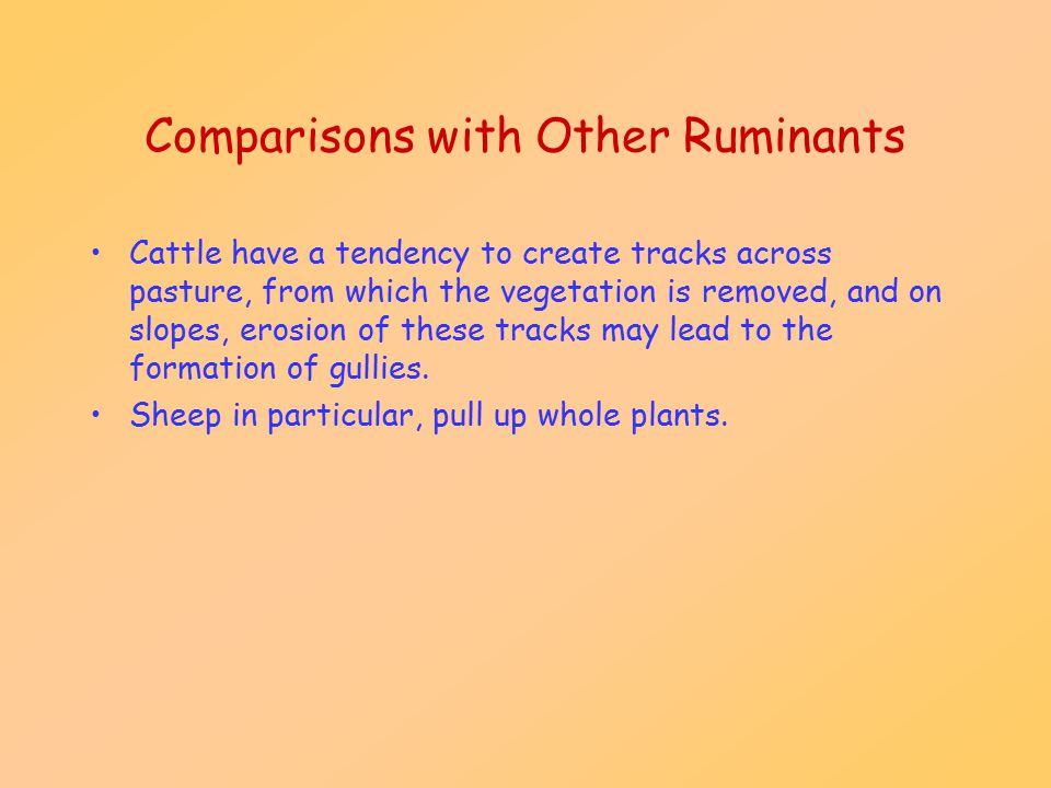 Comparisons with Other Ruminants