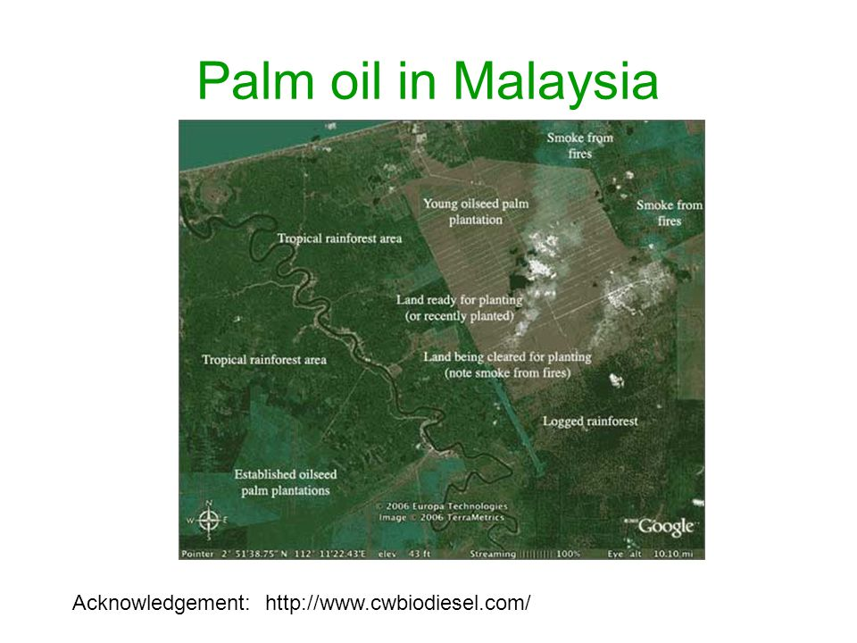Palm oil in Malaysia Acknowledgement: http://www.cwbiodiesel.com/