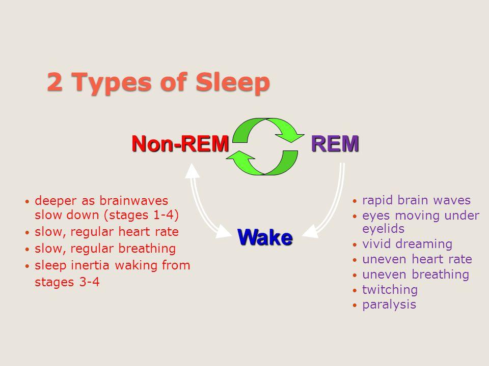 2 Types of Sleep Wake Non-REM REM