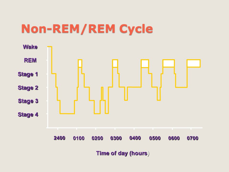 Non-REM/REM Cycle Wake REM Stage 1 Stage 2 Stage 3 Stage 4