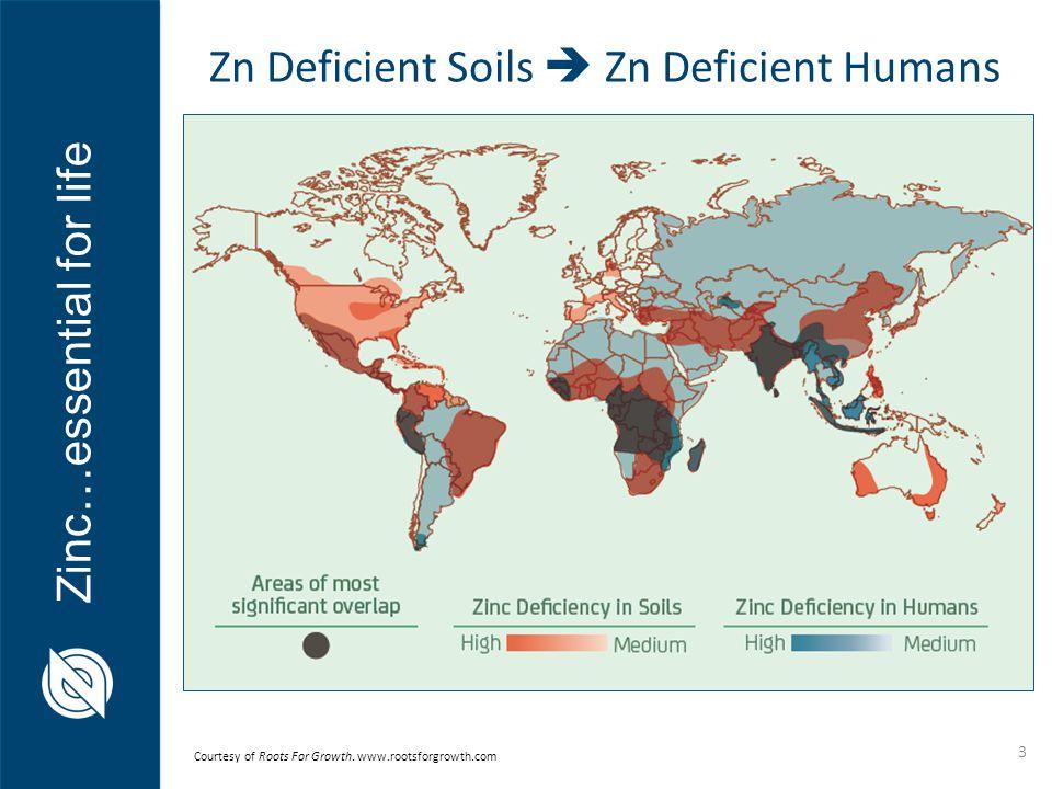Zn Deficient Soils  Zn Deficient Humans