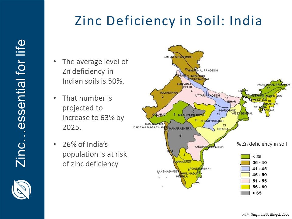 Dr andrew green director zinc nutrient initiative ppt for Soil in india