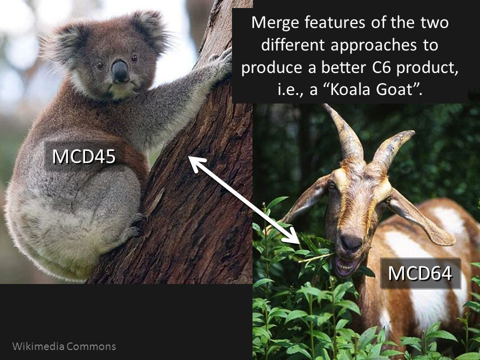 Merge features of the two different approaches to produce a better C6 product, i.e., a Koala Goat .