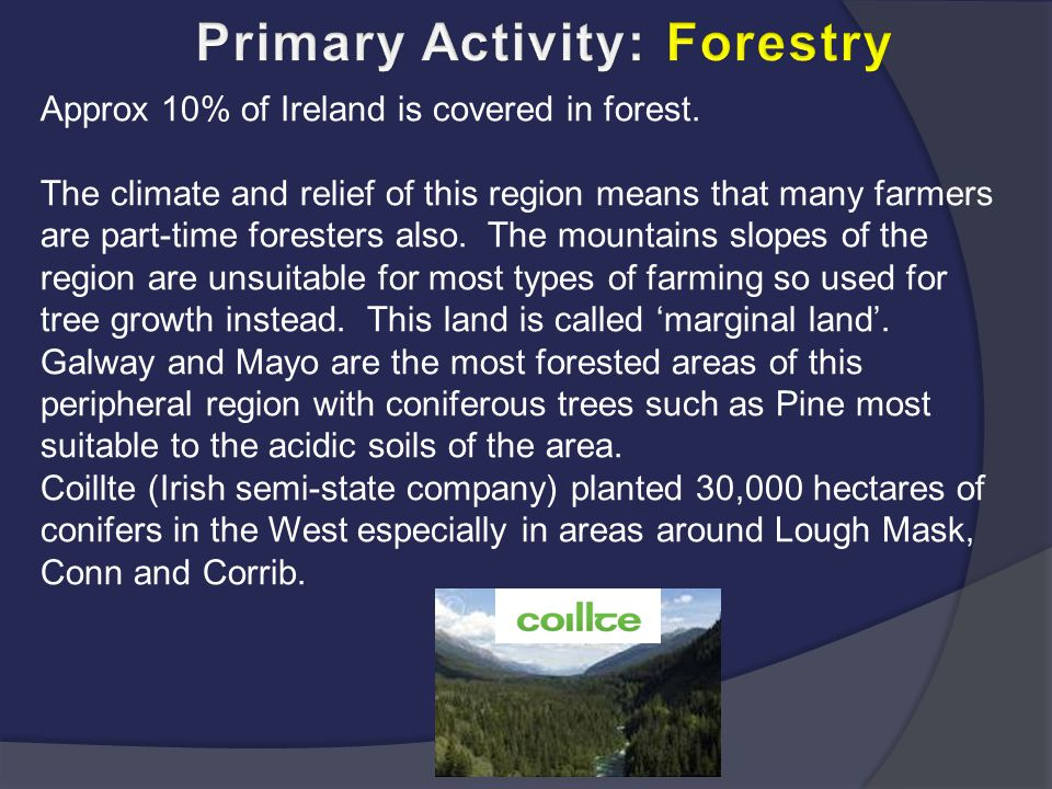 Primary Activity: Forestry