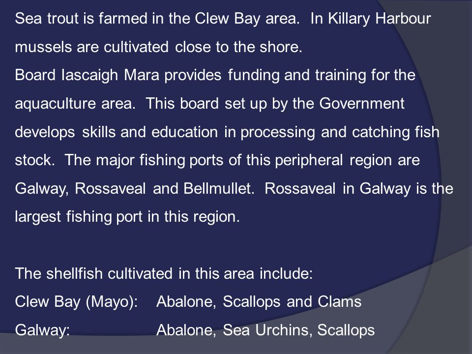 Sea trout is farmed in the Clew Bay area