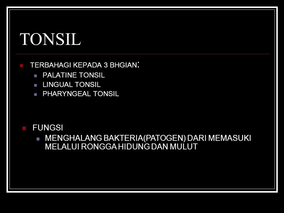 TONSIL TERBAHAGI KEPADA 3 BHGIAN: PALATINE TONSIL. LINGUAL TONSIL. PHARYNGEAL TONSIL. FUNGSI.