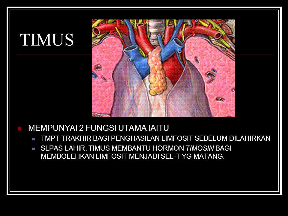 TIMUS MEMPUNYAI 2 FUNGSI UTAMA IAITU