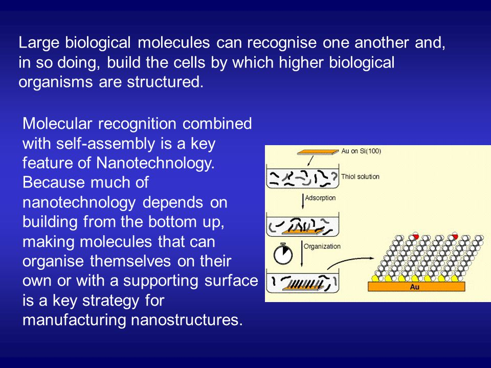 Large biological molecules can recognise one another and, in so doing, build the cells by which higher biological organisms are structured.