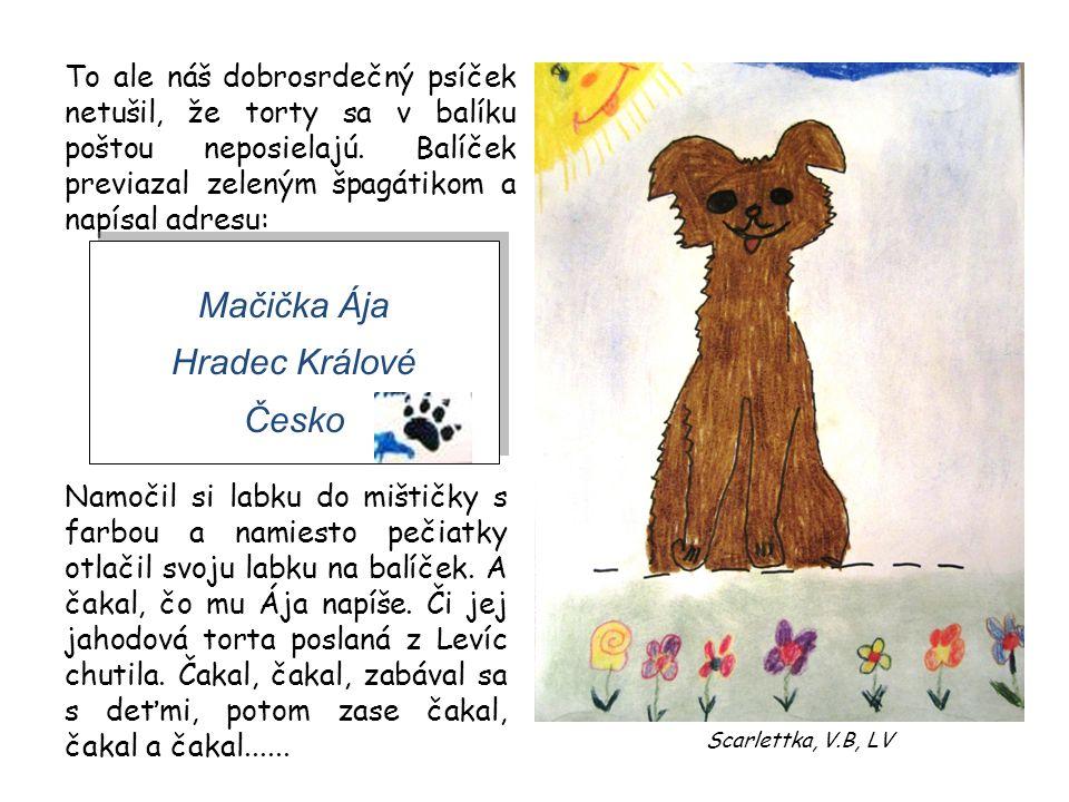 Mačička Ája Hradec Králové Česko