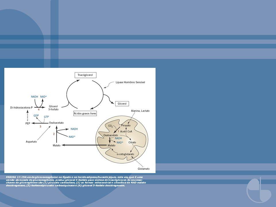 FIGURA 17. 19A via da gliceroneogênese no fígado e no tecido adiposo