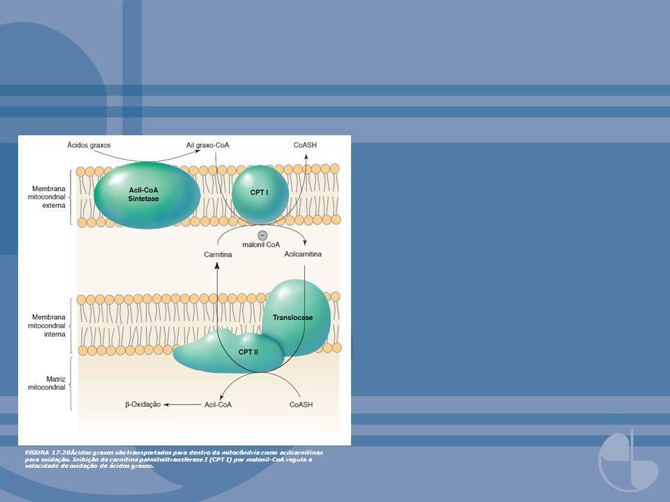 FIGURA 17.20Ácidos graxos são transportados para dentro da mitocôndria como acilcarnitinas para oxidação.
