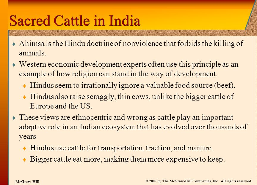 Sacred Cattle in India Ahimsa is the Hindu doctrine of nonviolence that forbids the killing of animals.