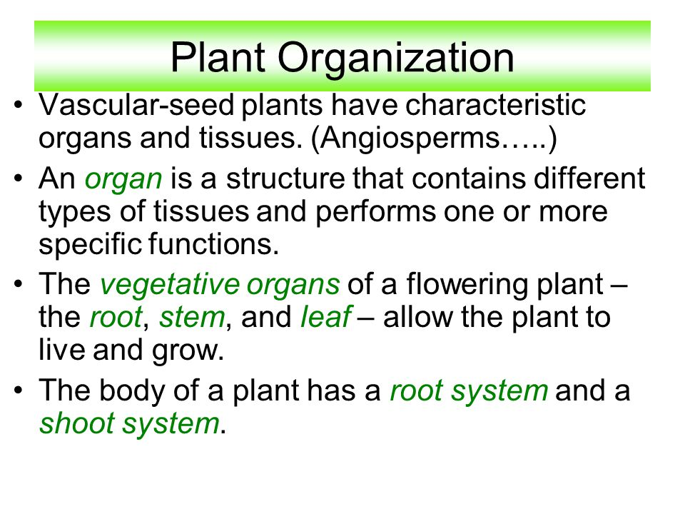 Plant Organization Vascular-seed plants have characteristic organs and tissues. (Angiosperms…..)