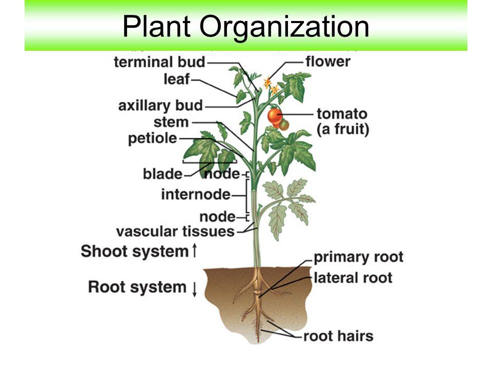 Plant Organization