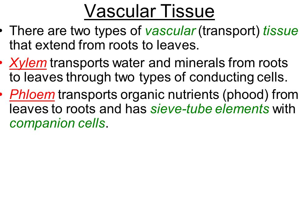 Vascular Tissue There are two types of vascular (transport) tissue that extend from roots to leaves.