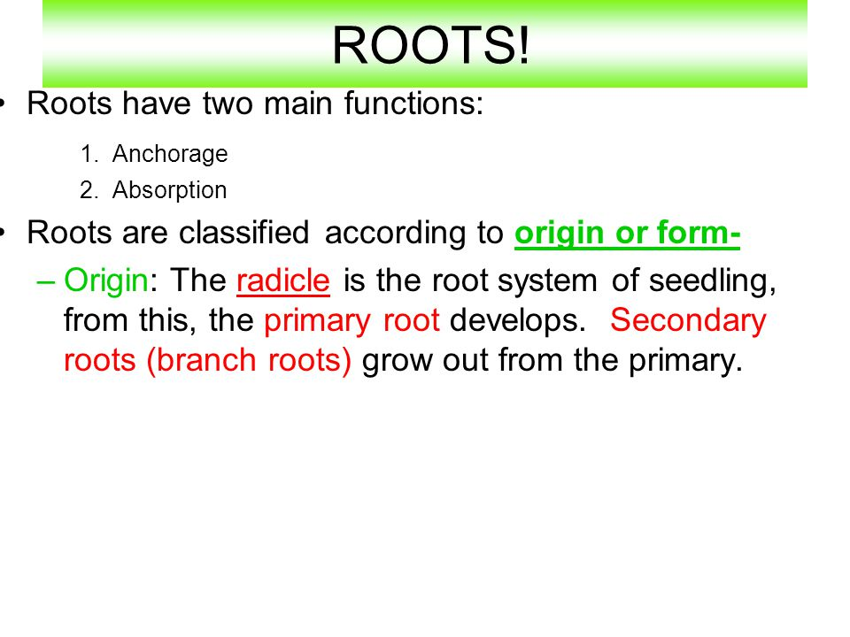 ROOTS! Roots have two main functions: 1. Anchorage