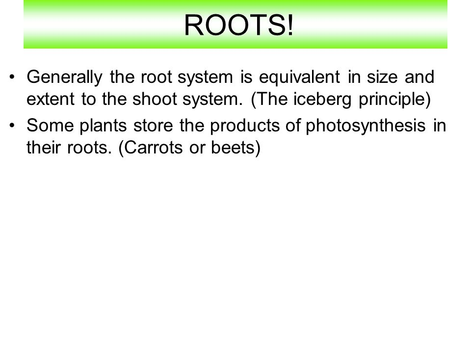 ROOTS! Generally the root system is equivalent in size and extent to the shoot system. (The iceberg principle)