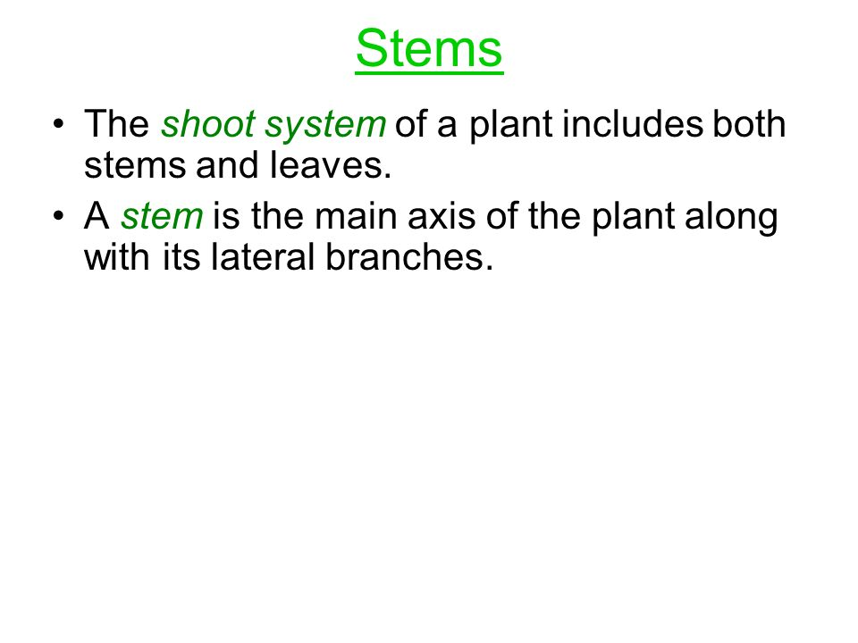 Stems The shoot system of a plant includes both stems and leaves.