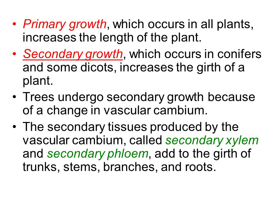 Primary growth, which occurs in all plants, increases the length of the plant.