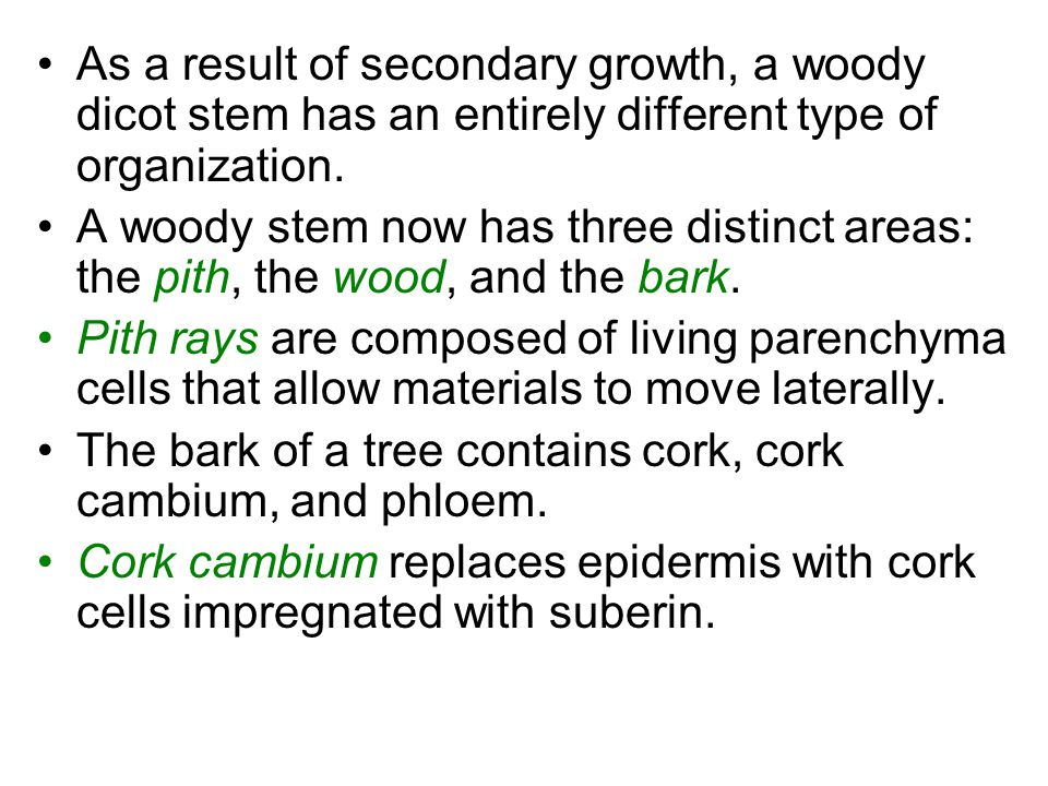 The bark of a tree contains cork, cork cambium, and phloem.